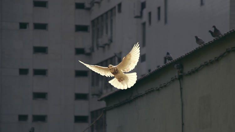 Aportes de la Iglesia católica a los procesos de paz en Colombia