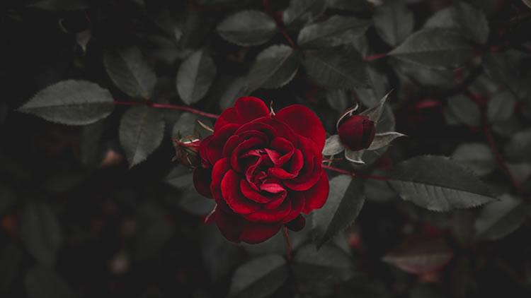 Espiritualidad de un corazón roto
